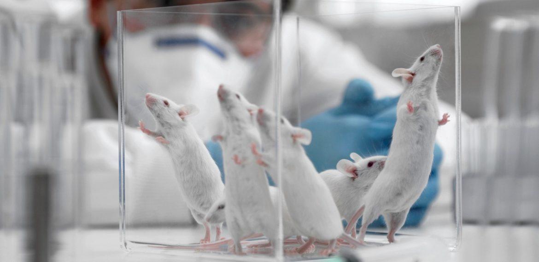 Российское законодательство и защита лабораторных животных